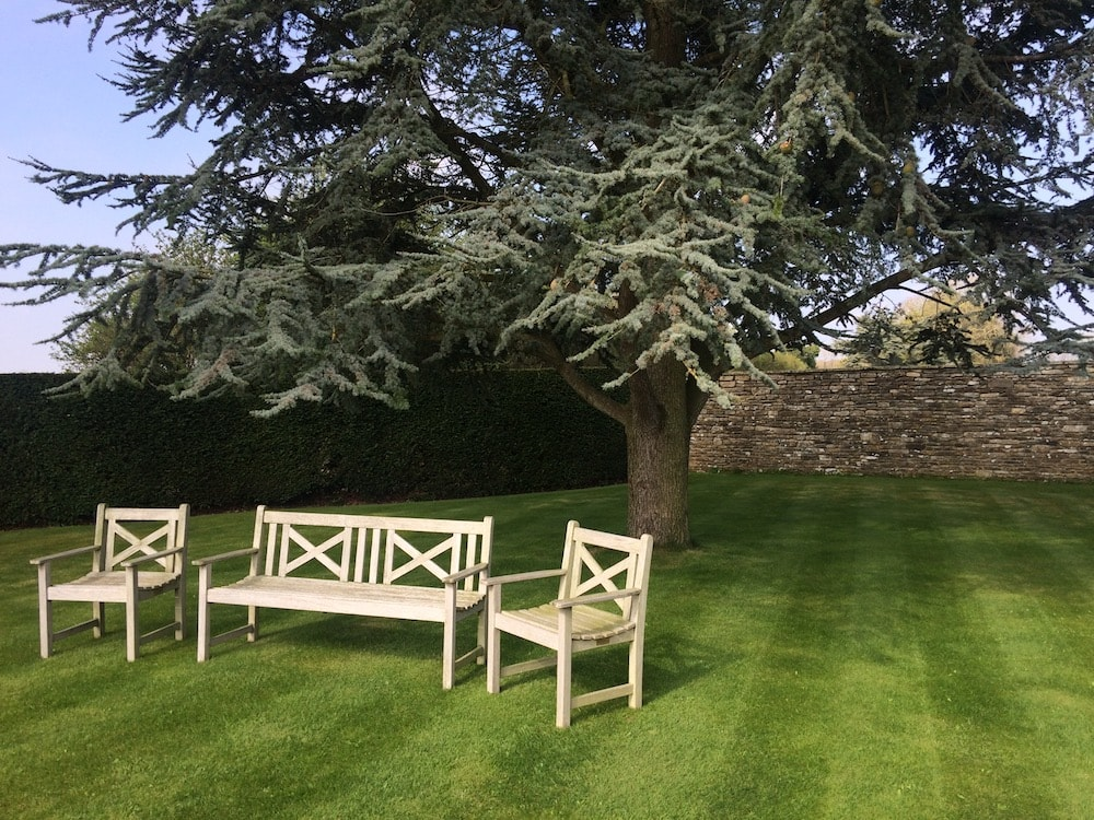 benches fir trees lawn